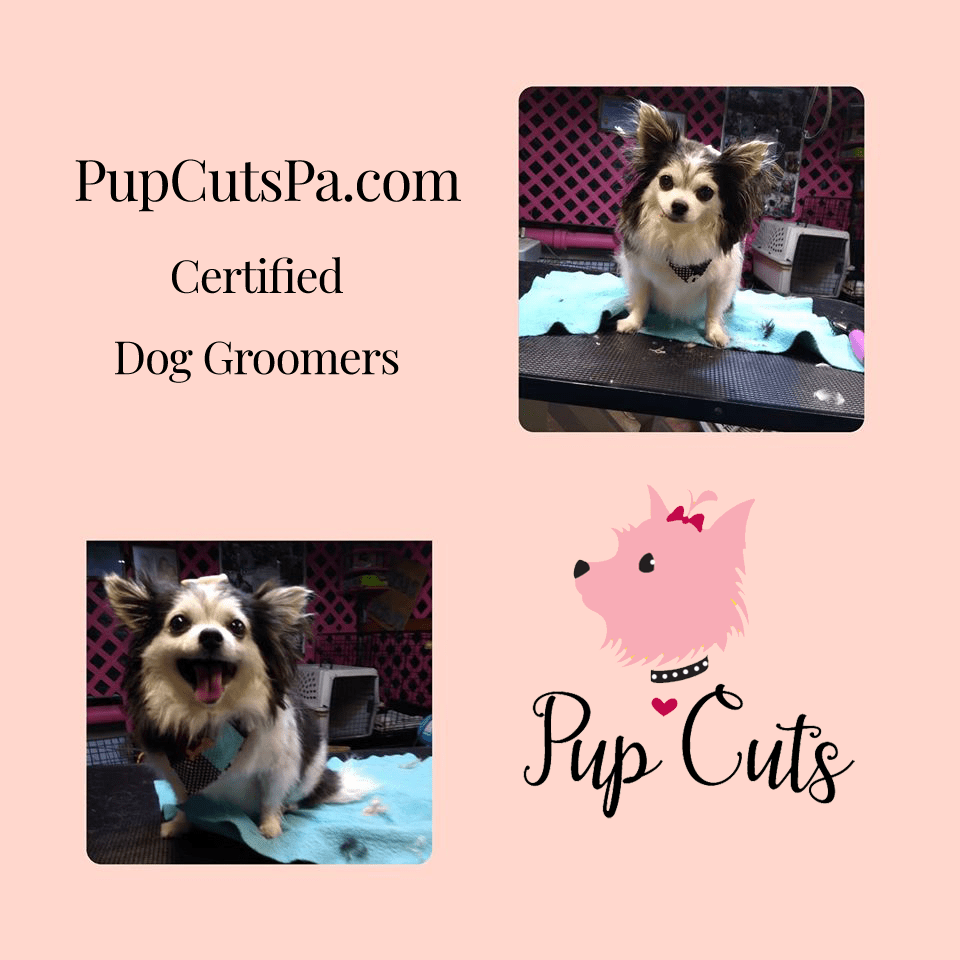 dog grooming prices 19067